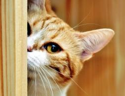 curiosidade & gato