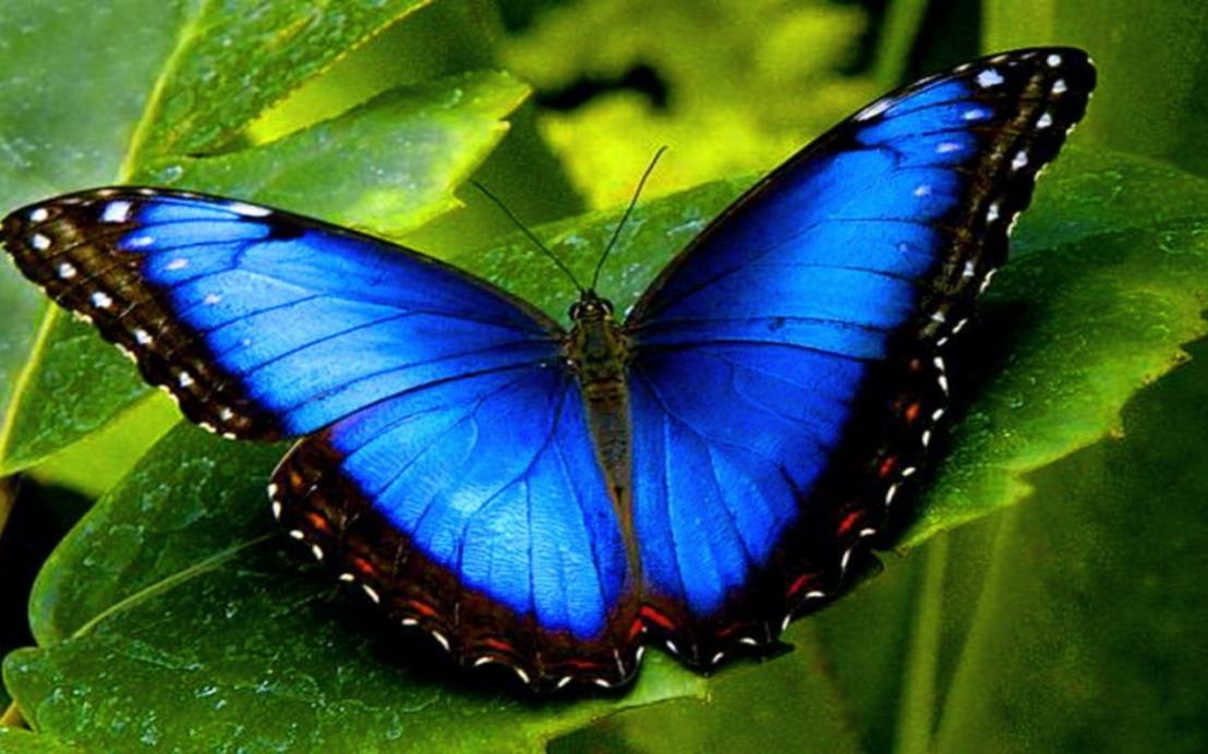 A borboleta azul (uma pitada sobre responsabilidades)
