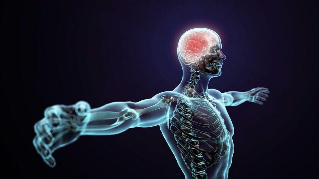 Estresse: na mente ou no corpo?