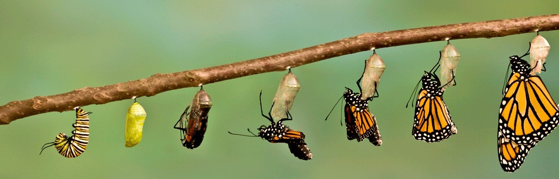 A lagarta e a borboleta ( parte 1 – a esperança)