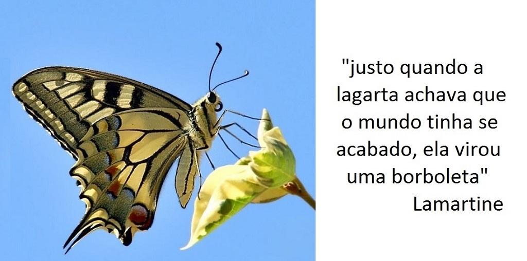 A lagarta e a borboleta ( parte 2 – a evolução)